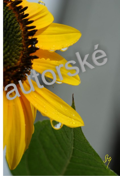 autorská fotka 105
